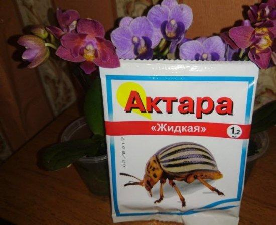 Актара для домашних цветов