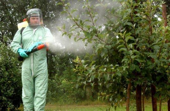 Опрыскивание растений инсектицидами