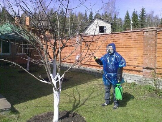 Обработка деревьев в защитном костюме