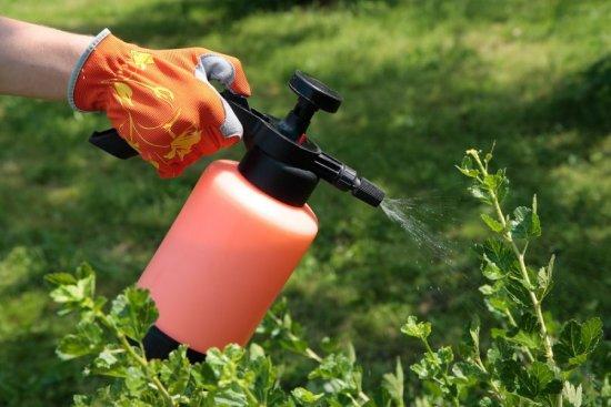 Обработка инсектицидом