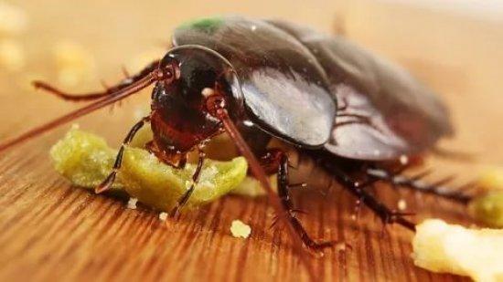Приманка с ядом для тараканов