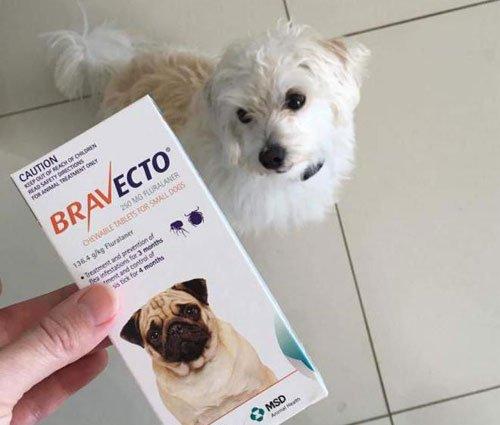 Собака и преапрат Бравекто