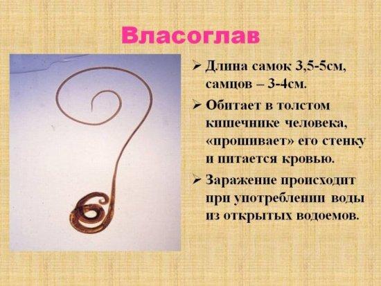 Власоглав