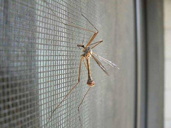Сетка от комаров