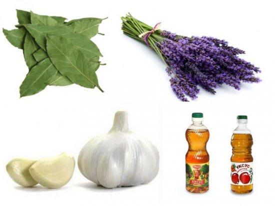 Народные средства от пищевой моли