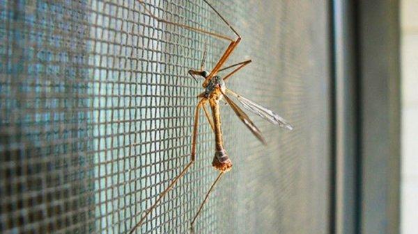 Москитная сетка от комаров