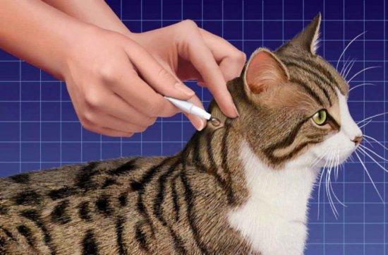 Капли от клещей для кошек