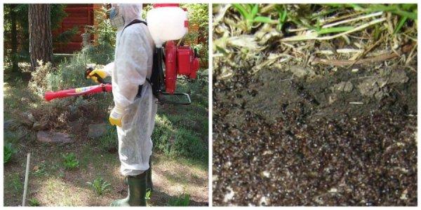 Обработка участка инсектицидами