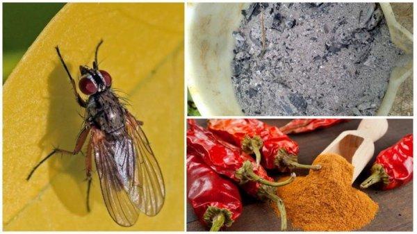 Народные методы борьбы с капустной мухой