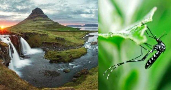 В Исландии отсутствуют комары