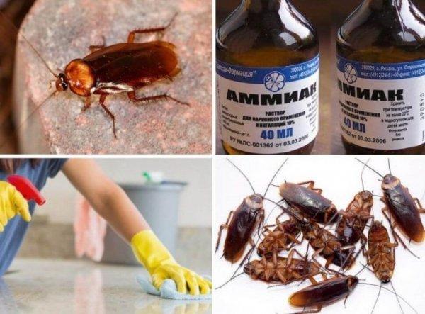 Борная кислота против тараканов