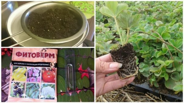 Инсектициды против нематоды земли