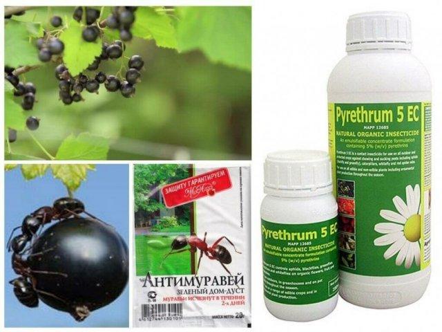 Инсектициды от муравьев на смородине