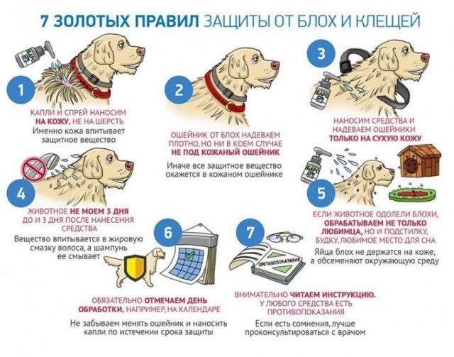 Защита собак от клещей и блох