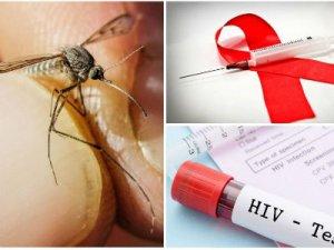 Может ли комар переносить ВИЧ