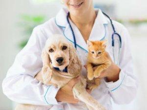 Кошка и собака у ветеринара