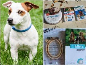 Защита собак от клещей