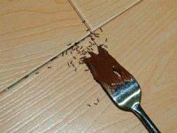 Черные муравьи в доме