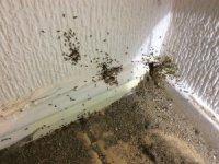Избавление от муравьев в доме