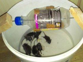 Ловушки для мышей в доме